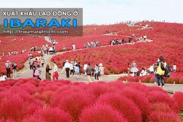 Xuất khẩu lao động ở Ibaraki Nhật Bản – Uy tín