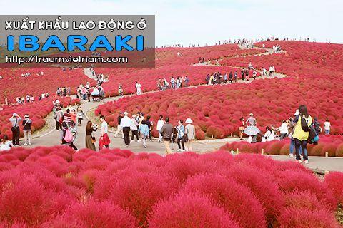 Xuất khẩu lao động ở Ibaraki Nhật Bản - Uy tín