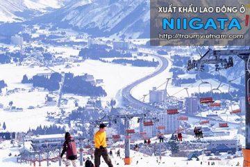 Xuất khẩu lao động ở Niigata Nhật Bản – không cọc