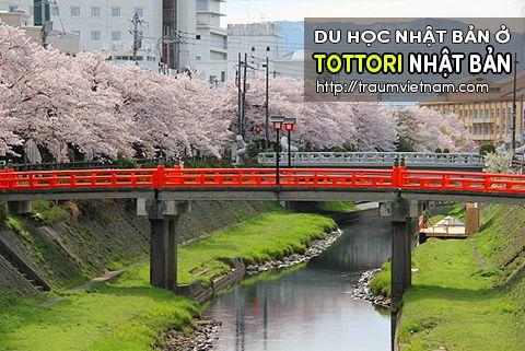 Du học ở Tottori Nhật Bản - bình yên và đáng sống