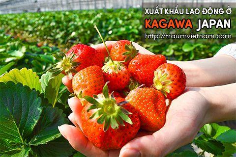 Xuất khẩu lao động ở Kagawa Nhật Bản - lương cao