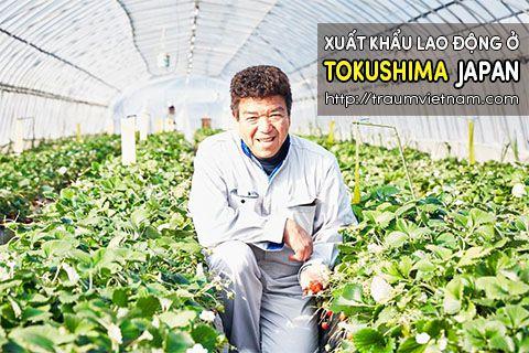 Xuất khẩu lao động ở Tokushima Nhật Bản - uy tín