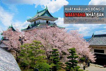 Xuất khẩu lao động ở Wakayama Nhật Bản – nhiều đơn tốt